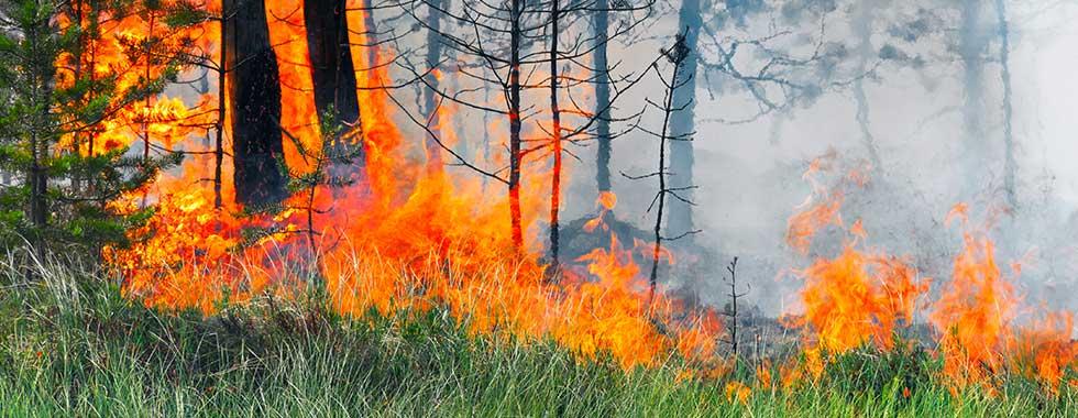 Enviro-Wildfire-Slides1